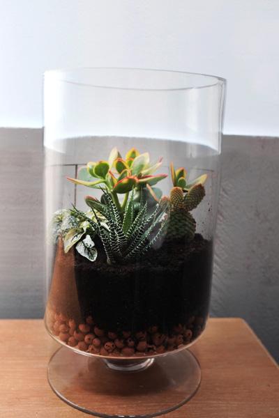diy 2 fabriquer un terrarium le blog d 39 interior 39 s. Black Bedroom Furniture Sets. Home Design Ideas