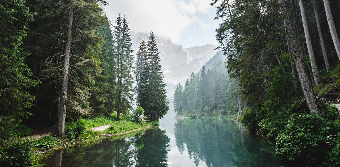 forêt et rivière