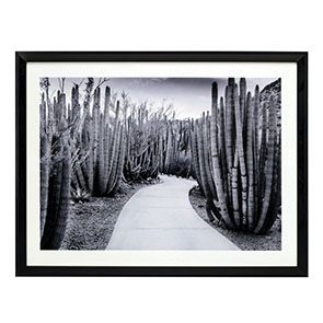 Tableau photo cactus 85x65